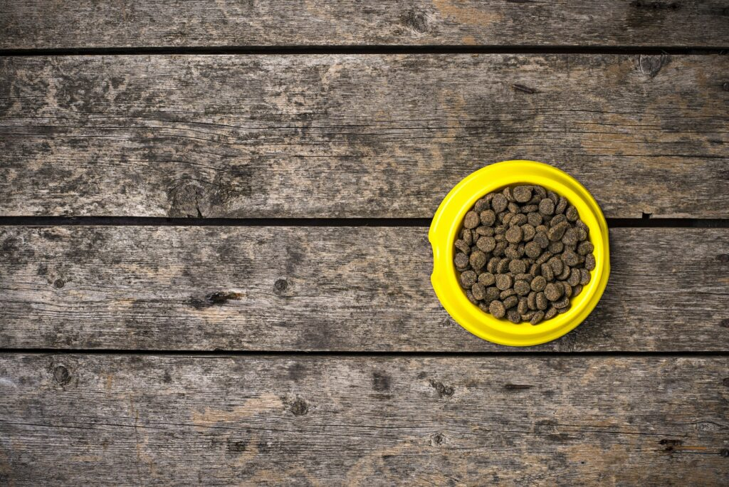 Bowl of dry dogs food on wooden floor
